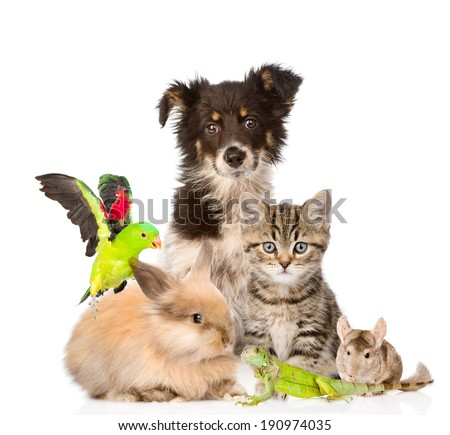 large group of animals. isolated on white background - stock photo