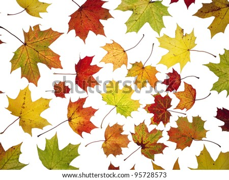 Large group of Autumn leafs isolated on white background