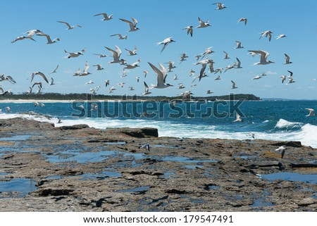 Large group of birds flying over rocks and waves by the sea - stock photo