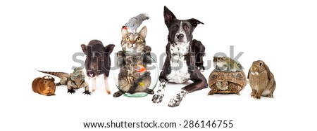 Large group of common household pets together - guinea pig, iguana, cat, fish, bird, dog, turtle, frog and bunny - stock photo