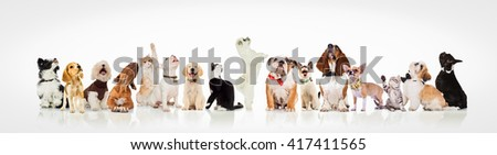 large group of curious dogs and cats looking up at something on white background - stock photo