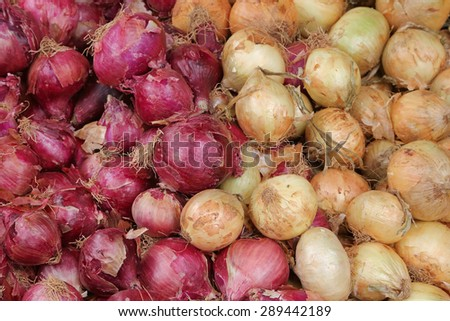 large group of onions - stock photo