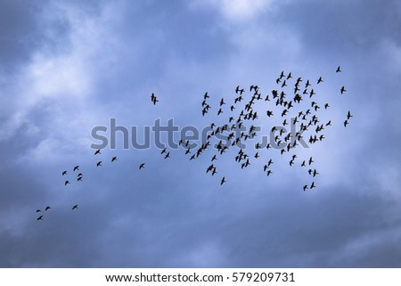 Large group of parrots