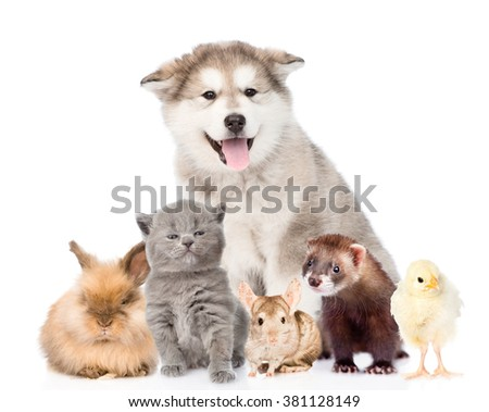Large group of pets looking at camera. isolated on white background - stock photo