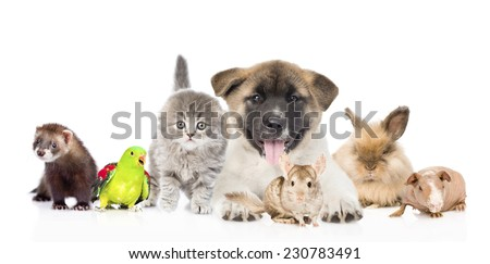 large group of pets together in front. Isolated on white background - stock photo