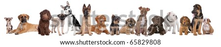 Large group of puppies isolated on a white background - stock photo