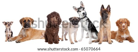 large group of puppies on a white background. - stock photo