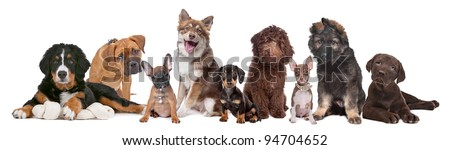 large group of puppies on a white background.