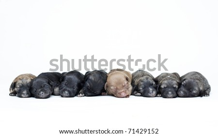 large group of puppies on a white background in row