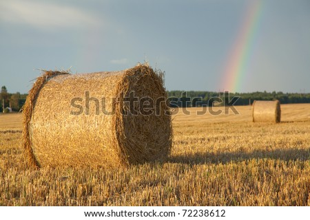 Large hay roll on the field - stock photo