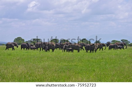 Large herd of elephants in a green field in Tarangire National Park, Tanzania. - stock photo