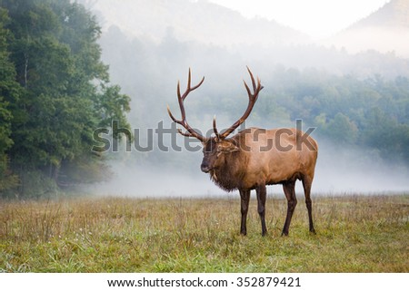Large male buck male in morning mist - stock photo