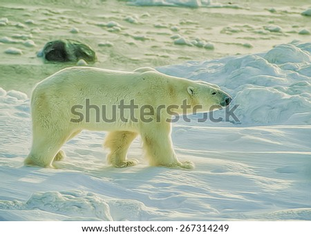 Large male polar bear on shore of Hudson Bay, digital oil painting - stock photo