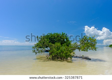 Large Mangrove bush growing offshore in the shallow and crystal clear waters of the Florida Keys on a perfect blue sky day