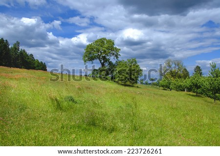 Large meadow with fruit trees situated on a slope at the edge of the woods in Germany, Europe.   - stock photo
