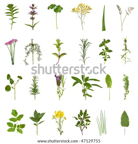 Large medicinal and culinary herb flower and leaf selection isolated over white background. - stock photo