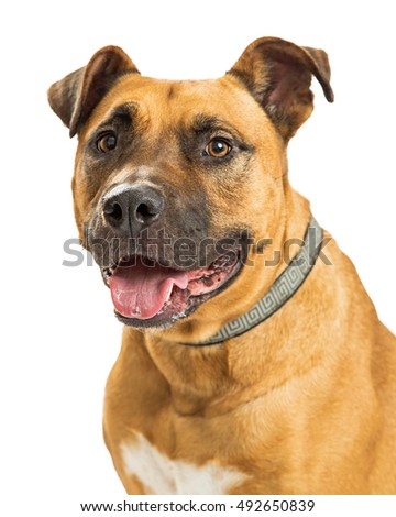 Large mixed breed dog with happy expression