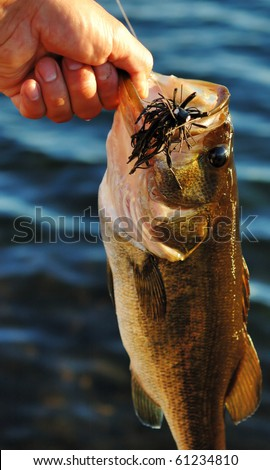 Large mouth bass - stock photo
