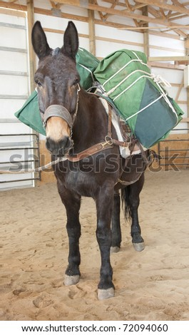 Large mule is packed to carry supplies. - stock photo