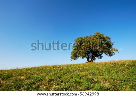 Large oak tree in green field under deep blue sky - stock photo