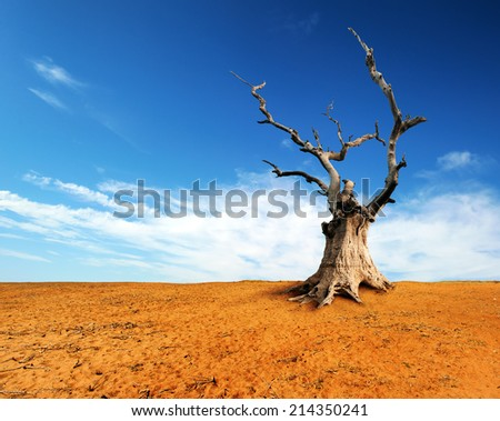 Large old and dead tree on dry desert land with blue sky and white clouds over horizon.  - stock photo