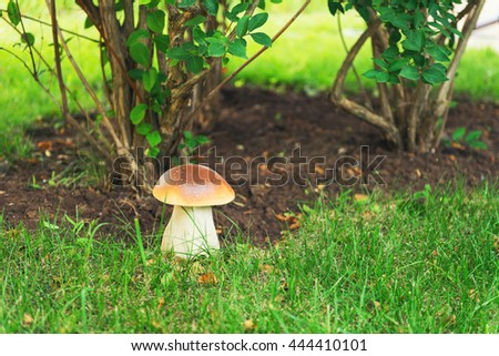 Large orange-cap boletus, mushroom in nature among the green grass, the trees in the garden in a meadow, stone sculpture - stock photo