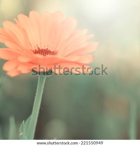 large orange vintage field flower on green background - stock photo