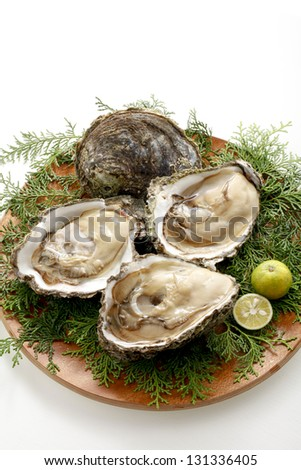 Large oyster - stock photo