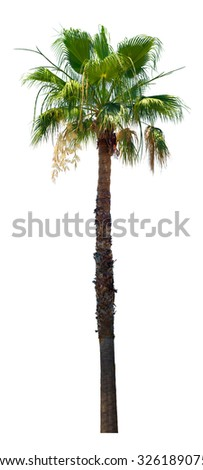 Large palm tree isolated over white background - stock photo