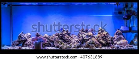 Large panoramic aquarium with tropical reef fish Azure Damselfish (Chrysiptera hemicyanea) and blue tang (Paracanthurus hepatus) - stock photo