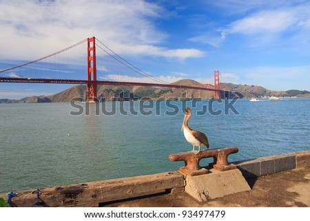Large pelican and Golden Gate Bridge in distance - stock photo