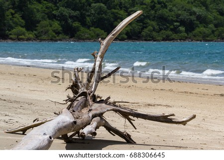 large piece of driftwood on the white sands of Nacascolo Beach in Guanacaste, Costa Rica