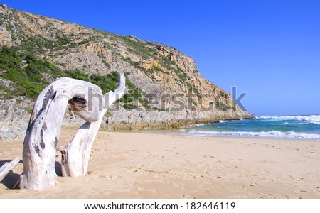 Large pieces of driftwood on the beach in South Africa - stock photo
