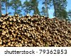 Large pile of cut wooden logs in pine forest for renewable energy. - stock photo