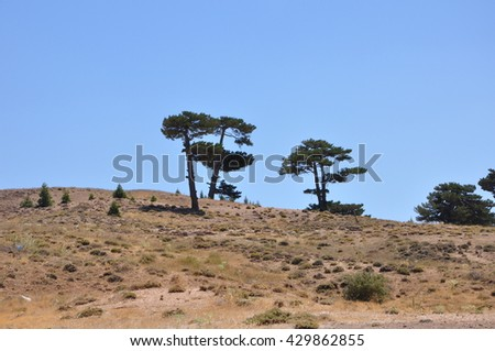large pine trees and hills.
