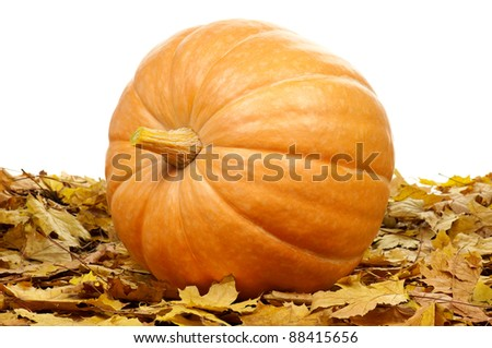 Large pumpkin surrounded by leaves on a white background