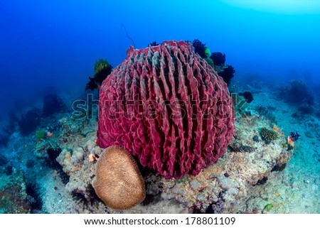 Large purple sponge and feather stars on a tropical coral reef - stock photo