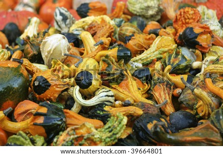 Large quantity of ornamental gourds with shallow depth of field.
