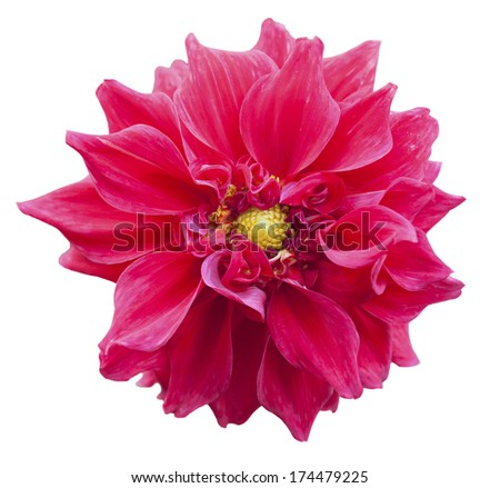 Large red flower with petals of orange gerbera on a white background - stock photo