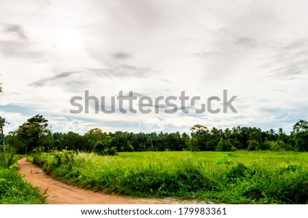 Large Rice Paddy And Beautiful Sunset and village road in sri lanka - stock photo