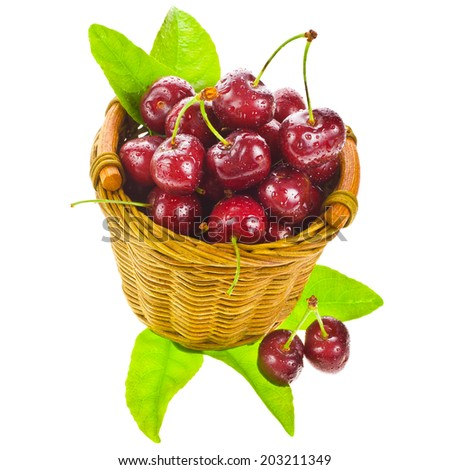 large ripe cherries with water drops and green leaves  is in a wicker basket  isolated on white background