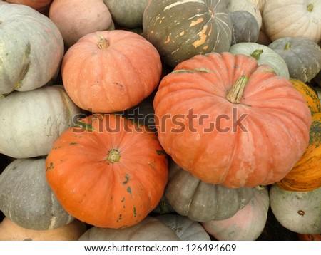 Large ripe pumpkin lying on the grass - stock photo