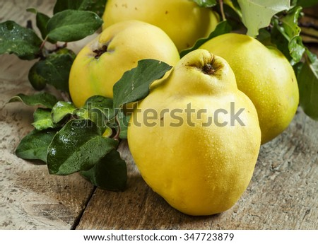 Large ripe quinces with green leaves on the old wooden table, selective focus - stock photo