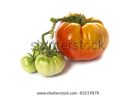 Large ripe red heirloom tomato in the same bunch as three small unripe green ones.  On white. - stock photo