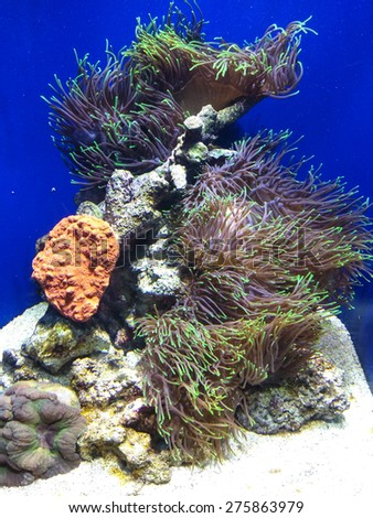 Large saltwater aquarium displaying tropical coral reef ecosystem. - stock photo