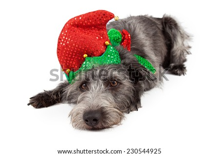 Large scruffy terrier mixed breed dog wearing an elf outfit while laying down - stock photo