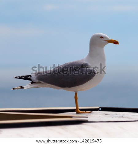 Large seagull on a background of blue sky - stock photo