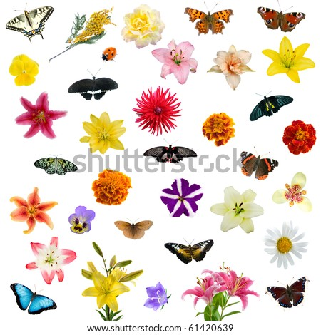 Large set of butterflies and flowers isolated on white background - stock photo