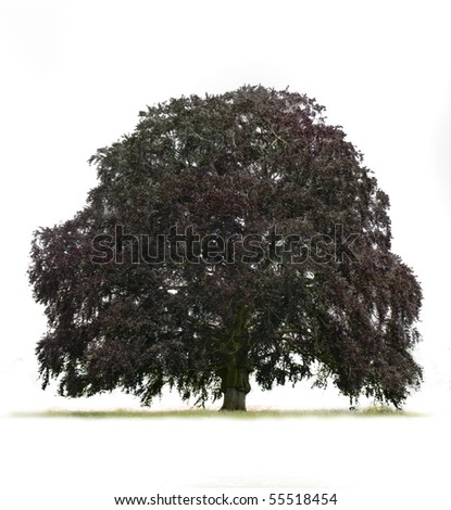 large single tree on plan white back ground idea for a cut out
