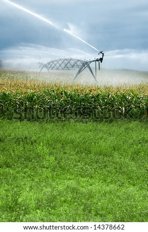 Large Sprinklers on Corporate Cornfield - stock photo